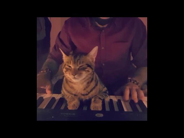 My cat loves music 🎹
