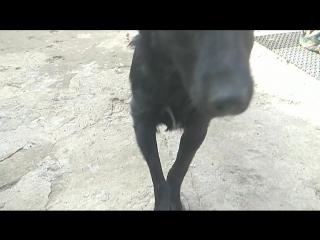 Ляля-собака с травмированной при рождении лапой,попала в приют в апреле текущего года.