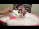 Cat Takes a Bath