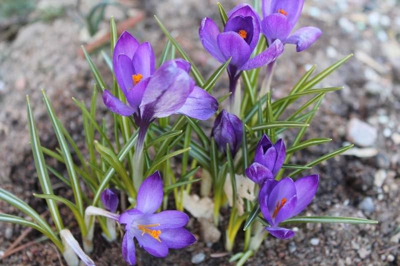 Апрель — важный месяц для садоводов-огородников