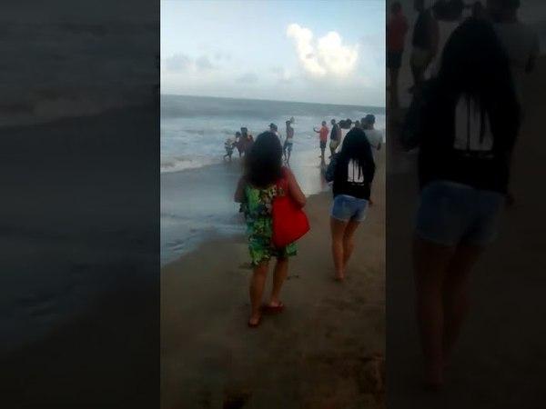 Novo ataque de tubarão na praia de Piedade em Jaboatão dos Guararapes-PE . 03062018