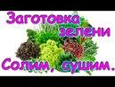 Зелень. Что можно заготавливать. Где применяем. Хранение. (07.17г.) Семья Бровченко.