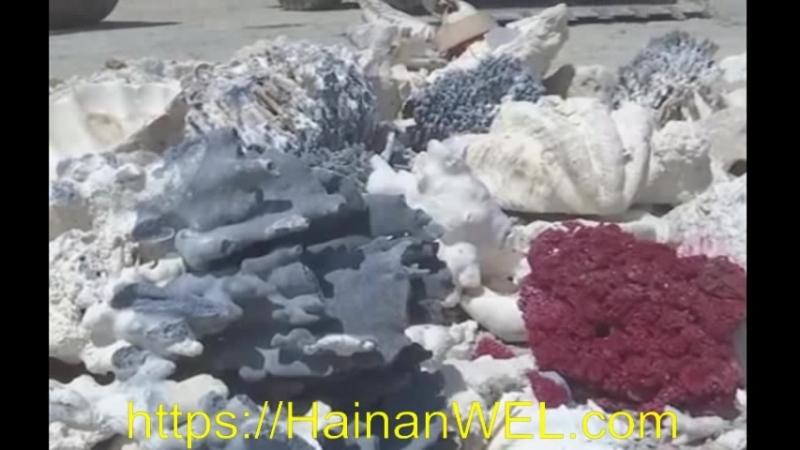 Изделия из жемчуга, кораллов, раковин и морских черепах, которые незаконно были куплены в Санья, остров Хайнань, Китай массово у