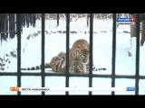"""""""Вести"""" узнали, как пережили аномальные холода обитатели зоопарка"""
