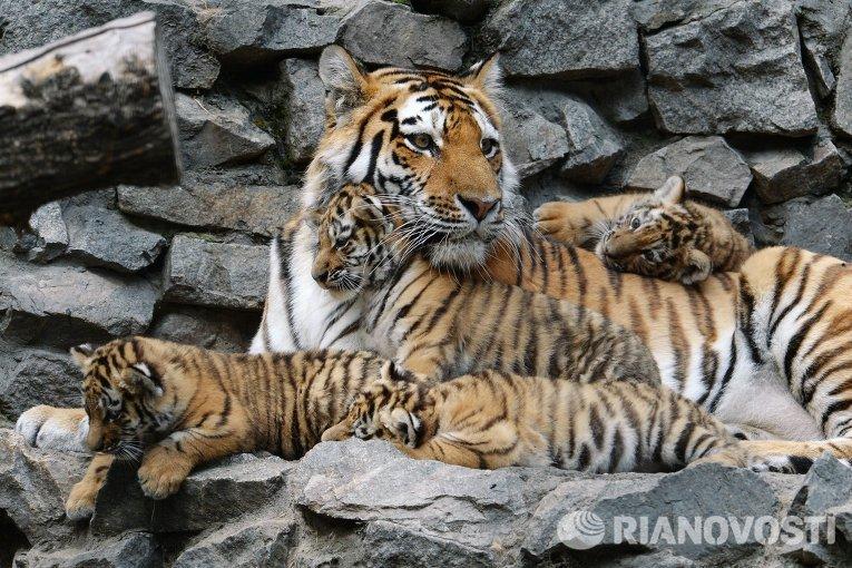 Зверушки. Фото © РИА Новости. Александр Кряжев