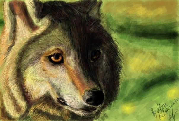 Волки картинки на аву - Картинки на аву: kartinkinaavutut.ru/razdeli/kartinki/volki-kartinki-na-avu.html