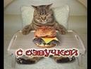 Приколы с котами и смешная озвучка животных – Магия ДО СЛЁЗ про котов от PSO