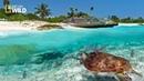 National Geographic Animals | Beautiful Islands Zanzibar - Discovery Nature Wild Wildlife
