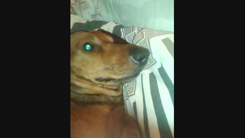 мой злой,но верный пес. ♥