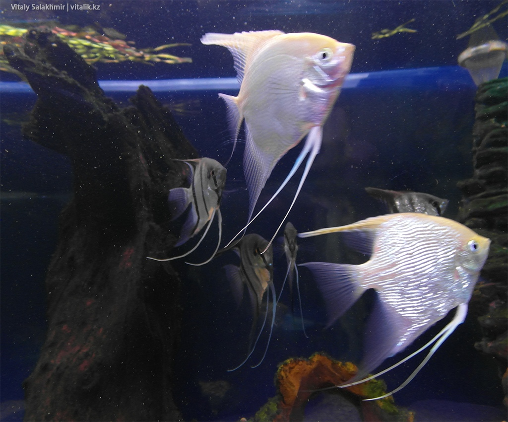 Рыба в аквариуме зоопарка Алматы 2018