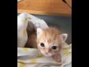 милый и смешной очень очень маленький котёнок