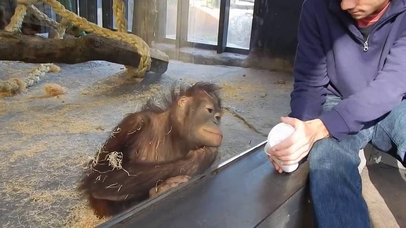 Короткий прикол . Фокус для обезьянки