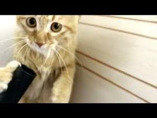 Смешное видео про животных! Кот СОсЁт ПЫЛЕСОС В ЗАСОС!!! видео приколы, смешное видео с детьми