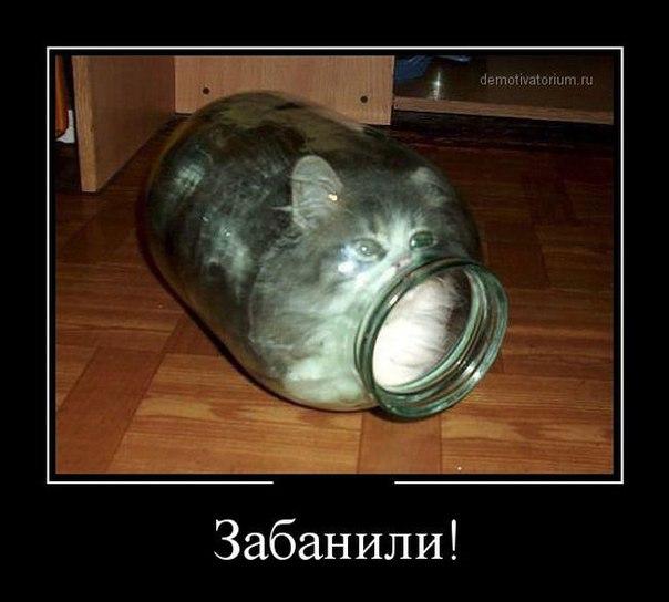 Никаких задержек в процессе введения безвизового режима между ЕС и Украиной на сегодня нет, - Томбиньский - Цензор.НЕТ 7865