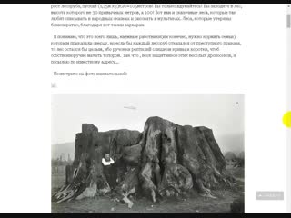 Деревья кремневой эры