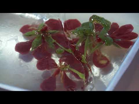 Làm thạch rau câu 3D hoa phượng đỏ và trang sách Quà tặng thầy cô ngày 20 11 ý nghĩa nhất