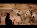 Верблюды в пустыне Вади Рам
