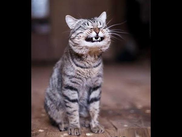 Superrr Funny CATs 2