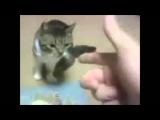 Приколы с животными! Ржачное видео!!!