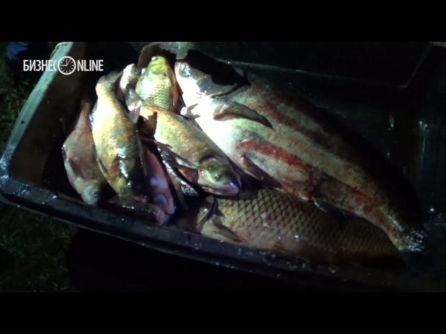 Лещи, караси и толстолобики: у браконьеров изъяли тонну рыбы