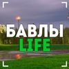 Бавлы LIFE