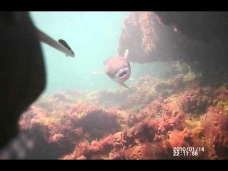 Подводная охота на Каспии. Промах 2