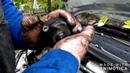 Comment démonter le module de pompe injection BOCHE VP44