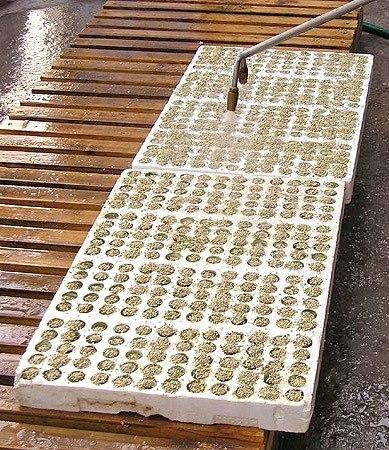 Линия для рассады посев семян рассады в кассеты 33