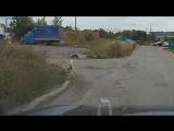На бульваре Миттова в Чебоксарах мужчина и женщина увидели на дороге кошку