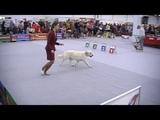 Пермская Ярмарка.Выставка Собак