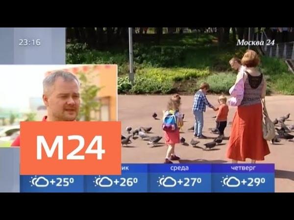 Синоптики обещают горожанам неделю идеальной погоды - Москва 24
