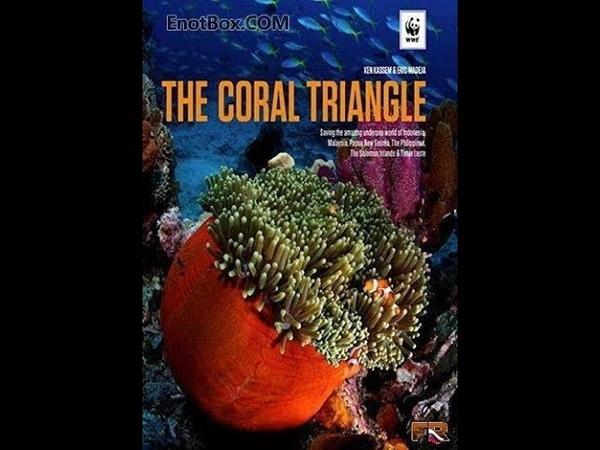 Великие тайны Кораллового треугольника. часть 3