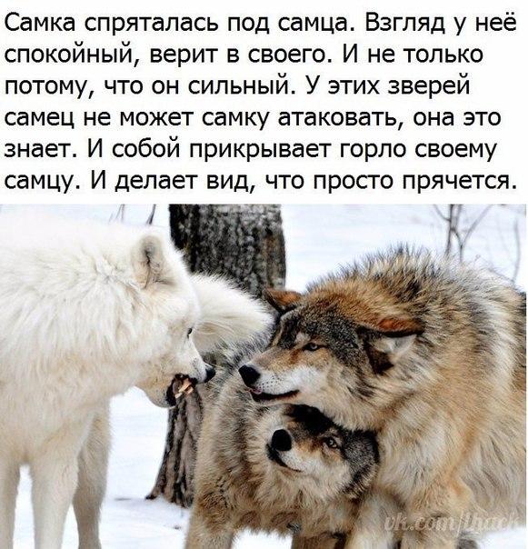 Фото №456247552 со страницы Оксаны Урсулович