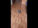 моя кошка играет с пунпоном 3