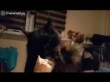 Собачка и кот вместе едят мороженое )