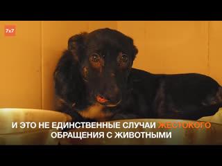 Ужасные случаи жестокого обращения с животными в Рязани