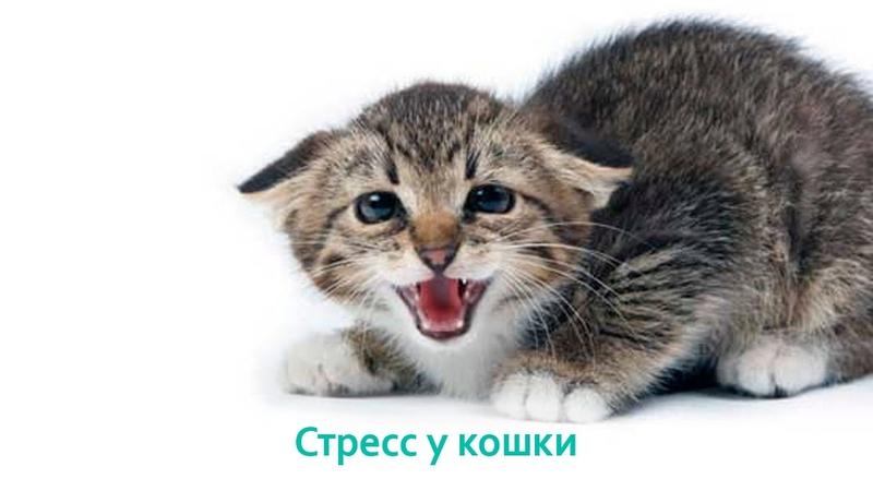 Стресс у кошки. Ветеринарная клиника Био-Вет.