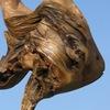 Удивительное дерево-предметы интерьера из дерева