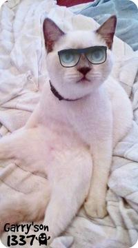 A-Cat Garry, 1 декабря 1983, Волгоград, id187990520