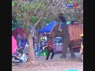 Слон с девушкой на бивне разгромил ярмарку в Таиланде