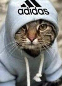 Кот adidas