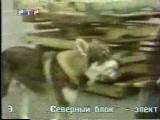 Маленький бродяга (РТР, 1999)