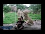 Приколы про Смешных детей в Подборке (Юмор 2014 года) Funny Compilation JOKEs Animals and Kids