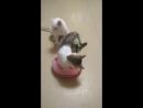 Клепа и Ромка играют