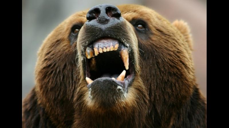 Разъярённый медведь гризли бежит по больнице и нападает на людей 18 СЛАБОНЕРВНЫМ НЕ СМОТРЕТЬ! УБЕРИТЕ ОТ ЭКРАНОВ ДЕТЕЙ И БЕРЕМЕ