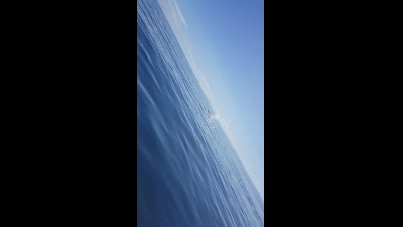 китыдоминиканасолнцеморе