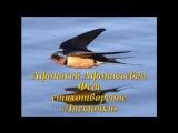 Страна читающая Сергей Кузнецов читает произведение Ласточки А. А. Фета