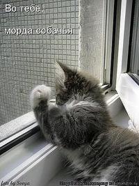 Татьяна Кузекина, 21 апреля 1994, Приморск, id193381306