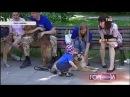 Сюжет о выставке собак из приюта Бирюлево в парке Фили 08.06.2014.