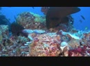 Коралловый риф Охотники и жертвы Познавательный природа животные 2012